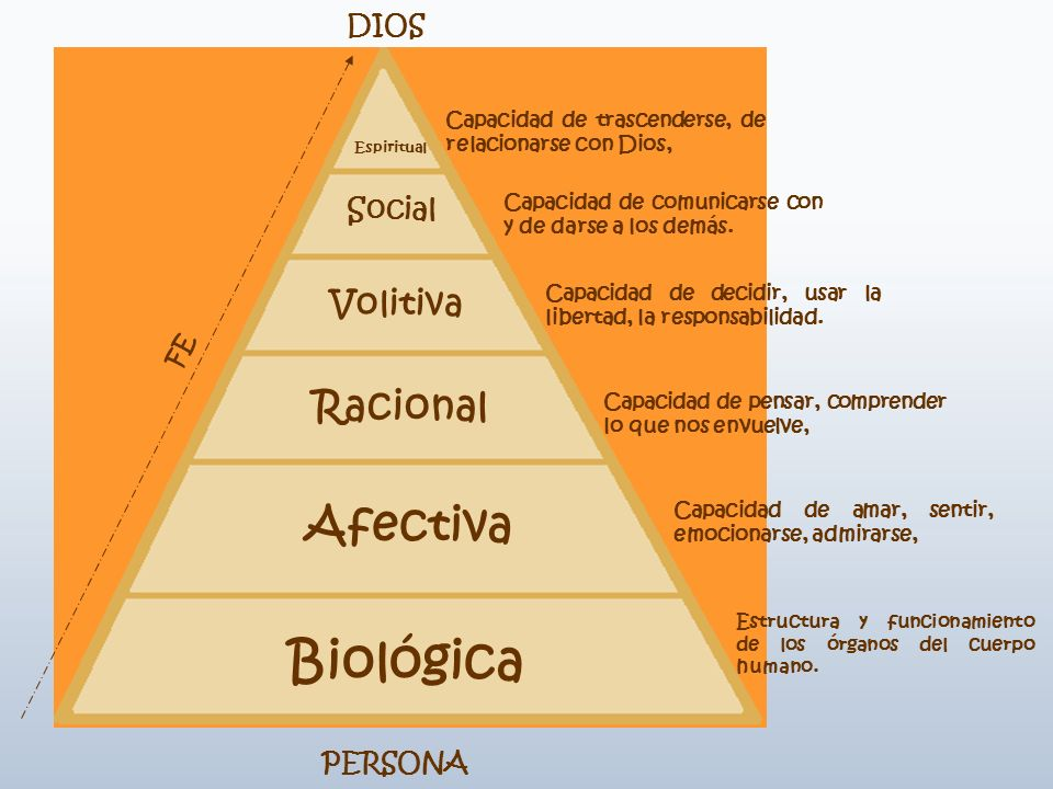 Biológica Afectiva Racional Volitiva Social DIOS FE PERSONA