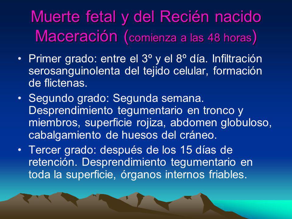 Muerte fetal y del Recién nacido Maceración (comienza a las 48 horas)