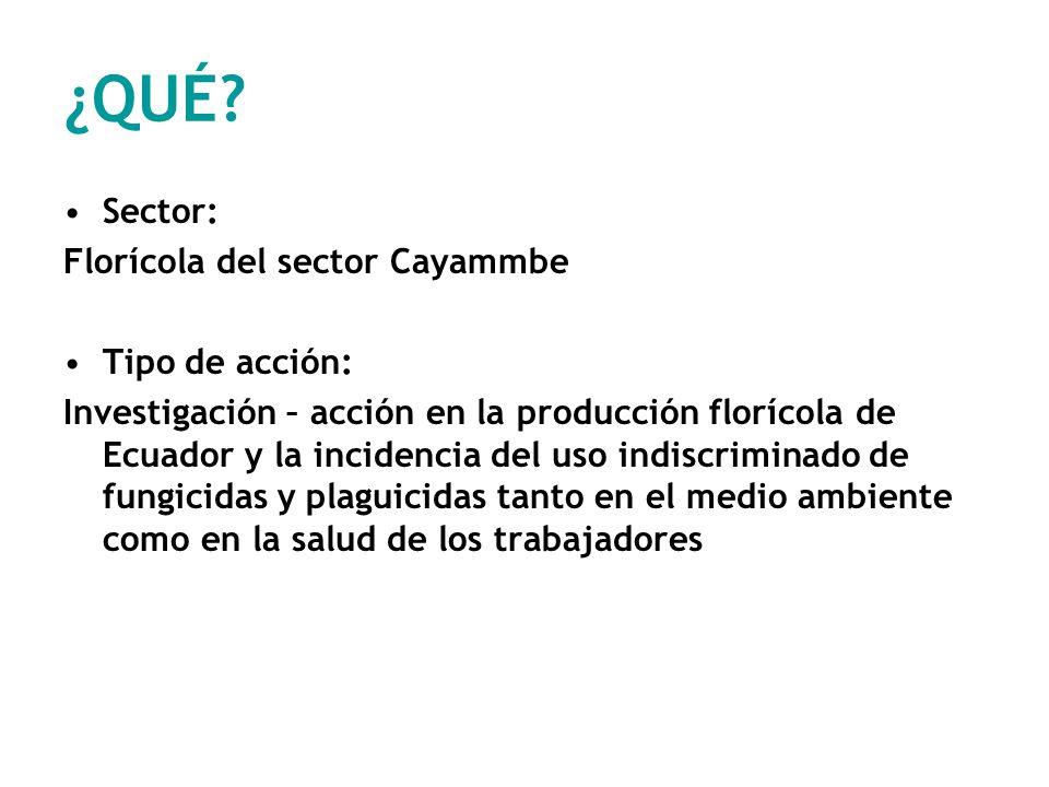 ¿QUÉ Sector: Florícola del sector Cayammbe Tipo de acción: