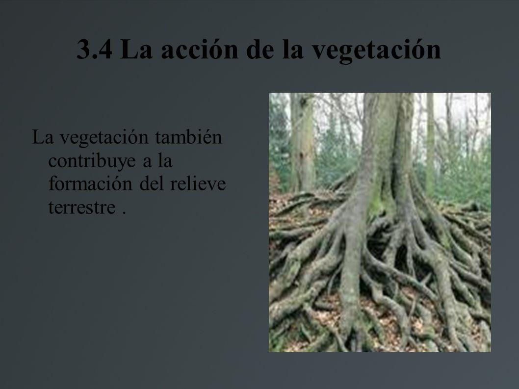 3.4 La acción de la vegetación