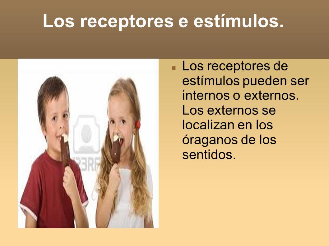 Los receptores e estímulos.