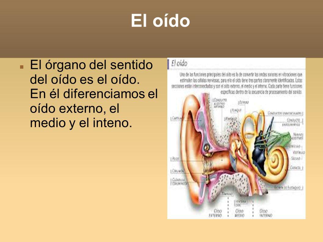 El oído El órgano del sentido del oído es el oído.