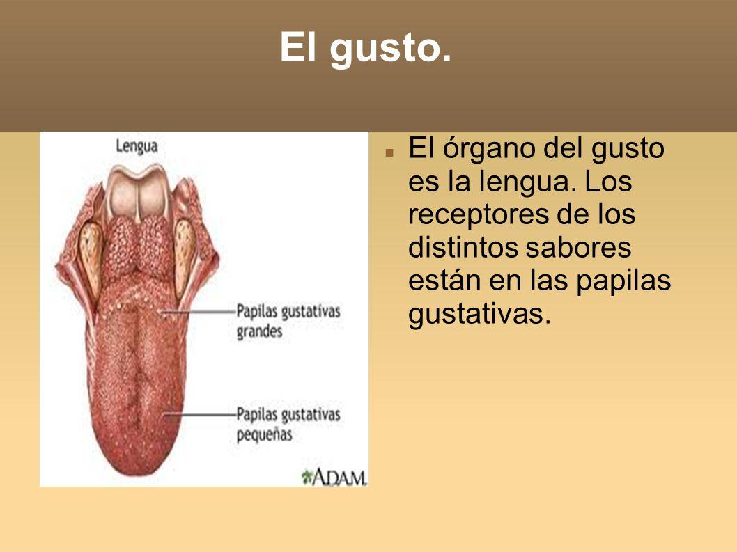 El gusto. El órgano del gusto es la lengua.
