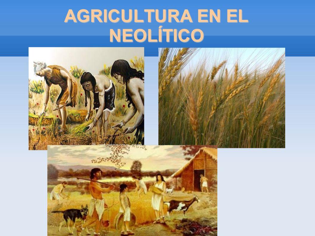 AGRICULTURA EN EL NEOLÍTICO