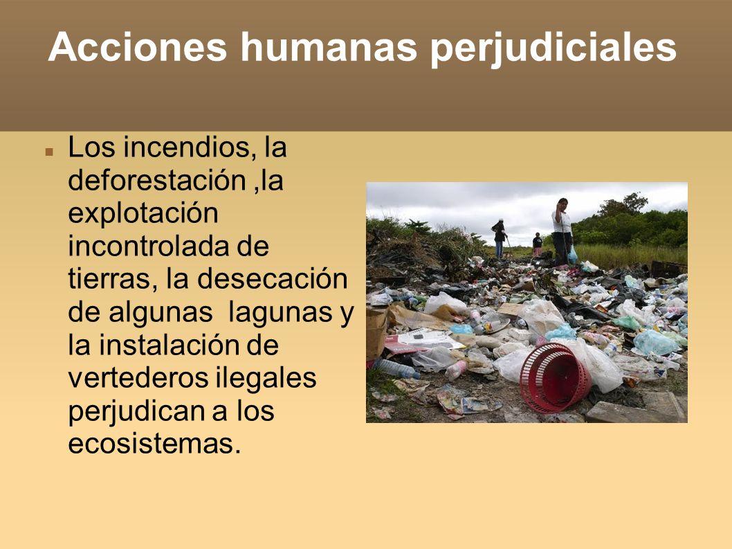 Acciones humanas perjudiciales