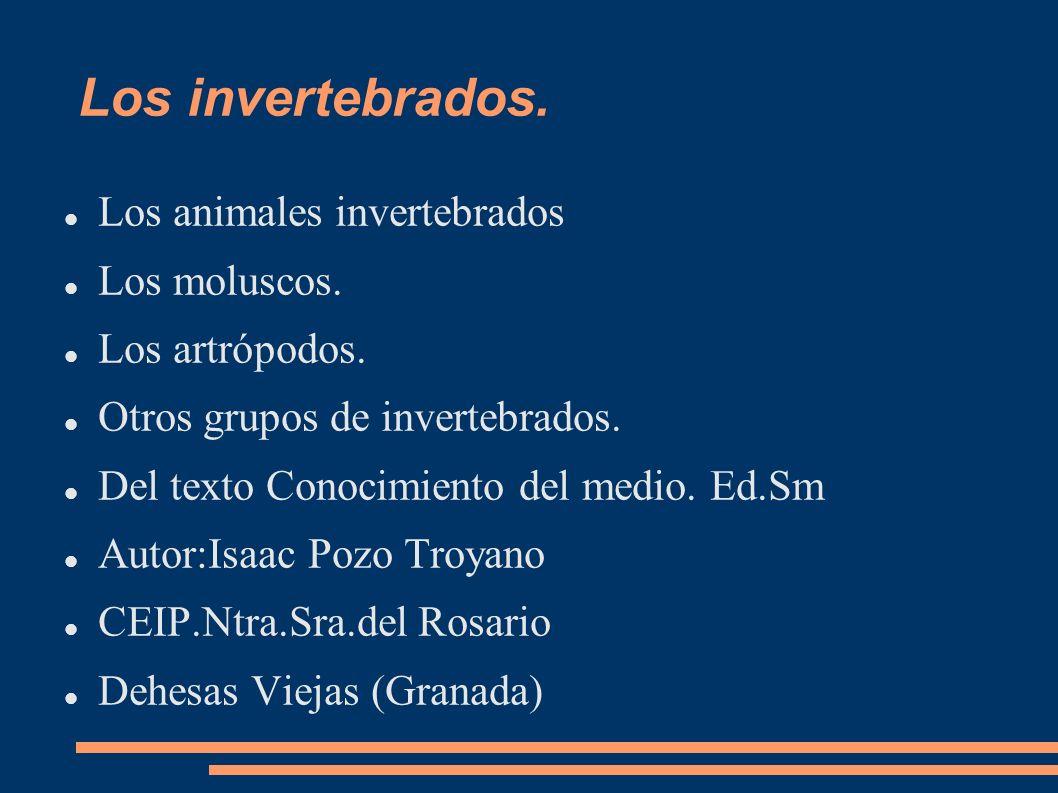 Los invertebrados. Los animales invertebrados Los moluscos.