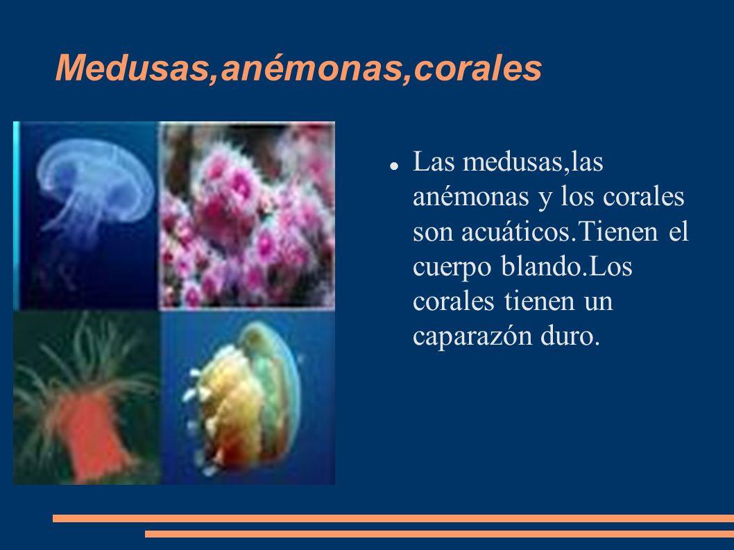 Medusas,anémonas,corales