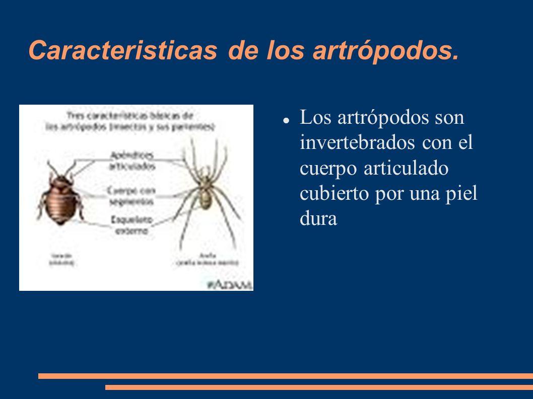 Caracteristicas de los artrópodos.