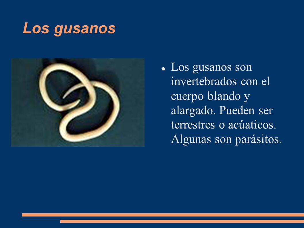 Los gusanosLos gusanos son invertebrados con el cuerpo blando y alargado.