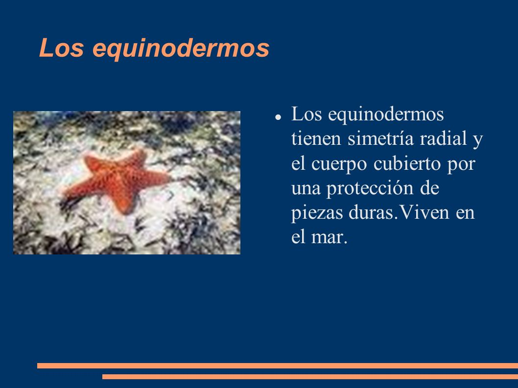 Los equinodermos Los equinodermos tienen simetría radial y el cuerpo cubierto por una protección de piezas duras.Viven en el mar.