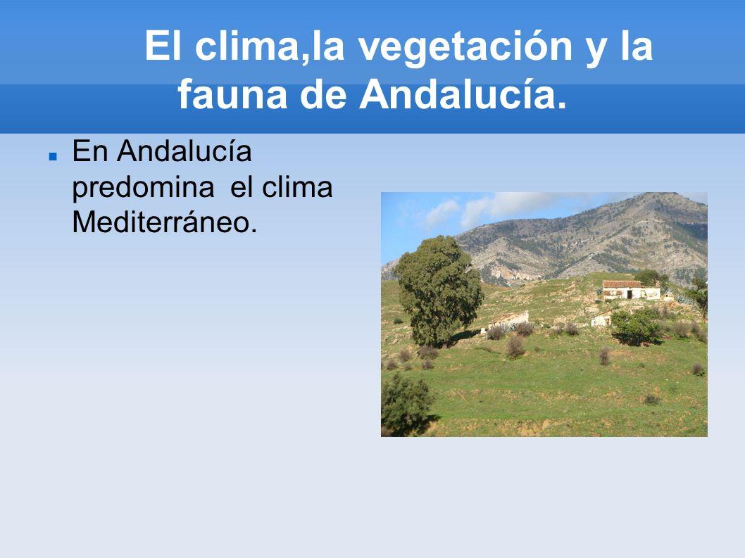 El clima,la vegetación y la fauna de Andalucía.