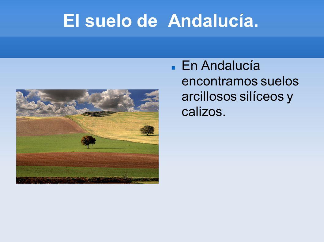 El suelo de Andalucía. En Andalucía encontramos suelos arcillosos silíceos y calizos.