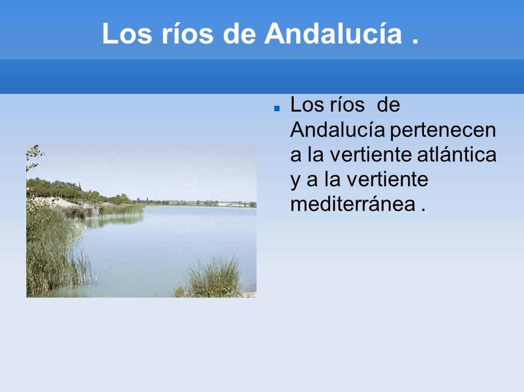 Los ríos de Andalucía .