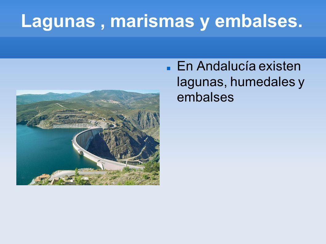 Lagunas , marismas y embalses.