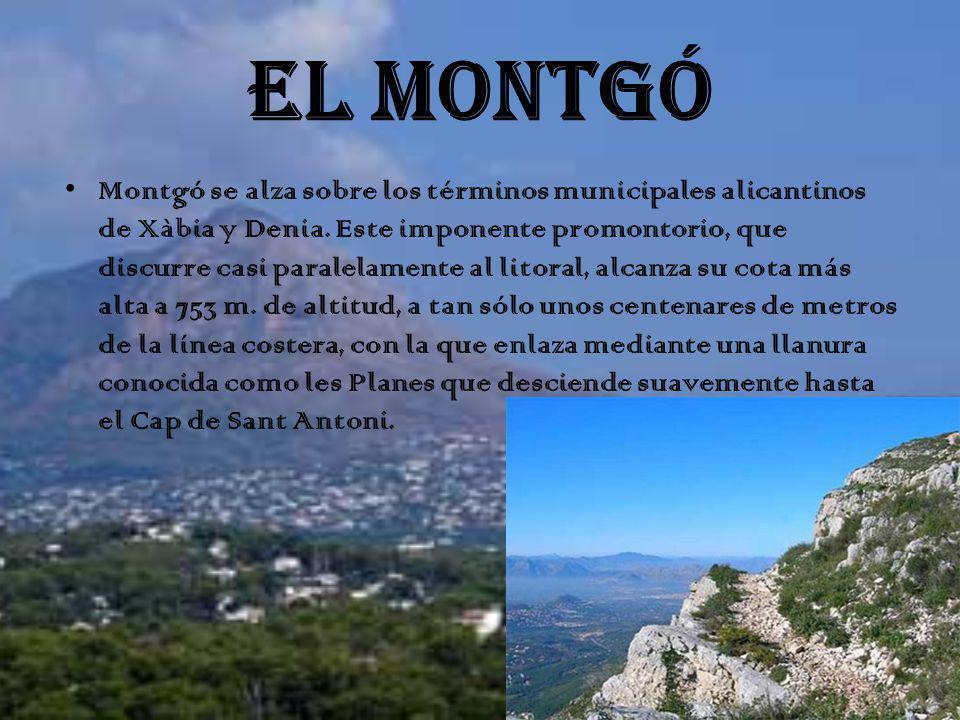 EL MONTGÓ
