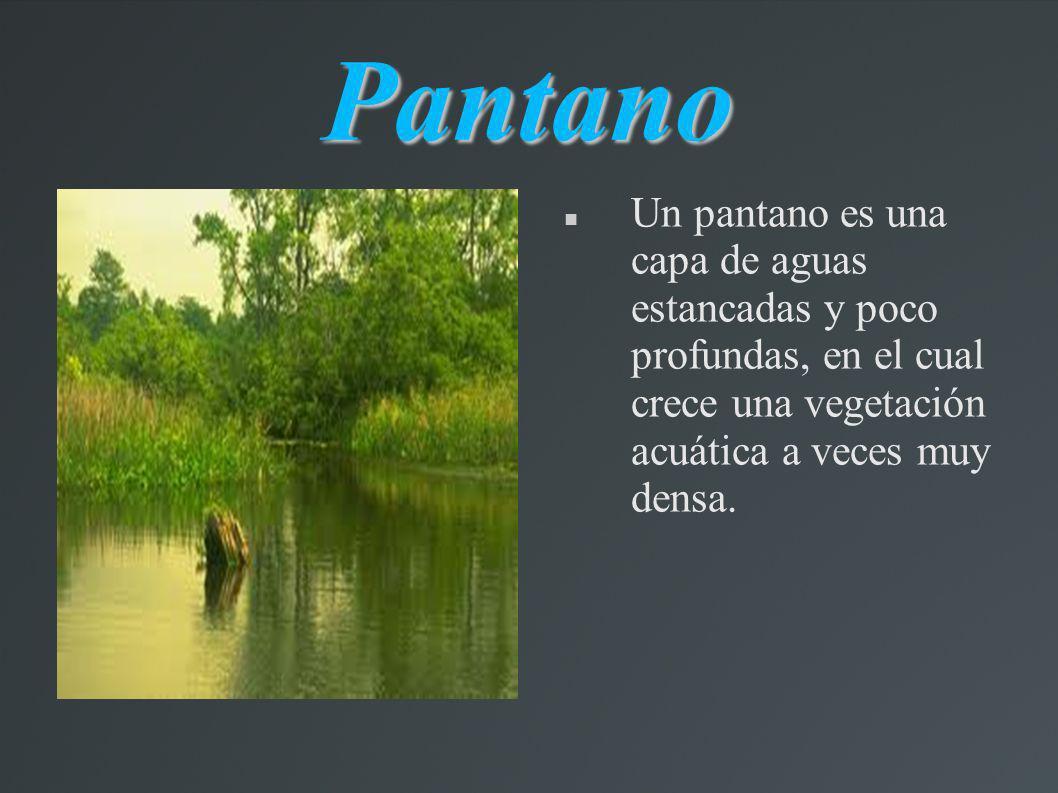 Pantano Un pantano es una capa de aguas estancadas y poco profundas, en el cual crece una vegetación acuática a veces muy densa.