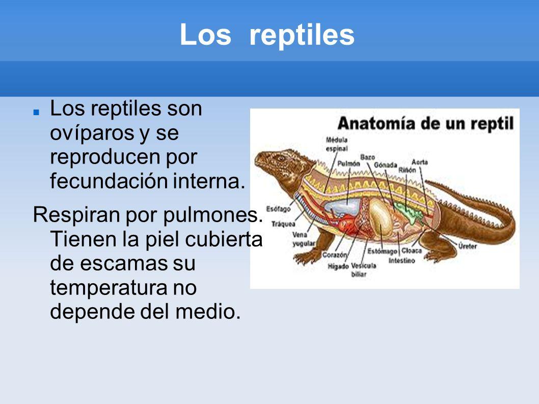 Los reptiles Los reptiles son ovíparos y se reproducen por fecundación interna.