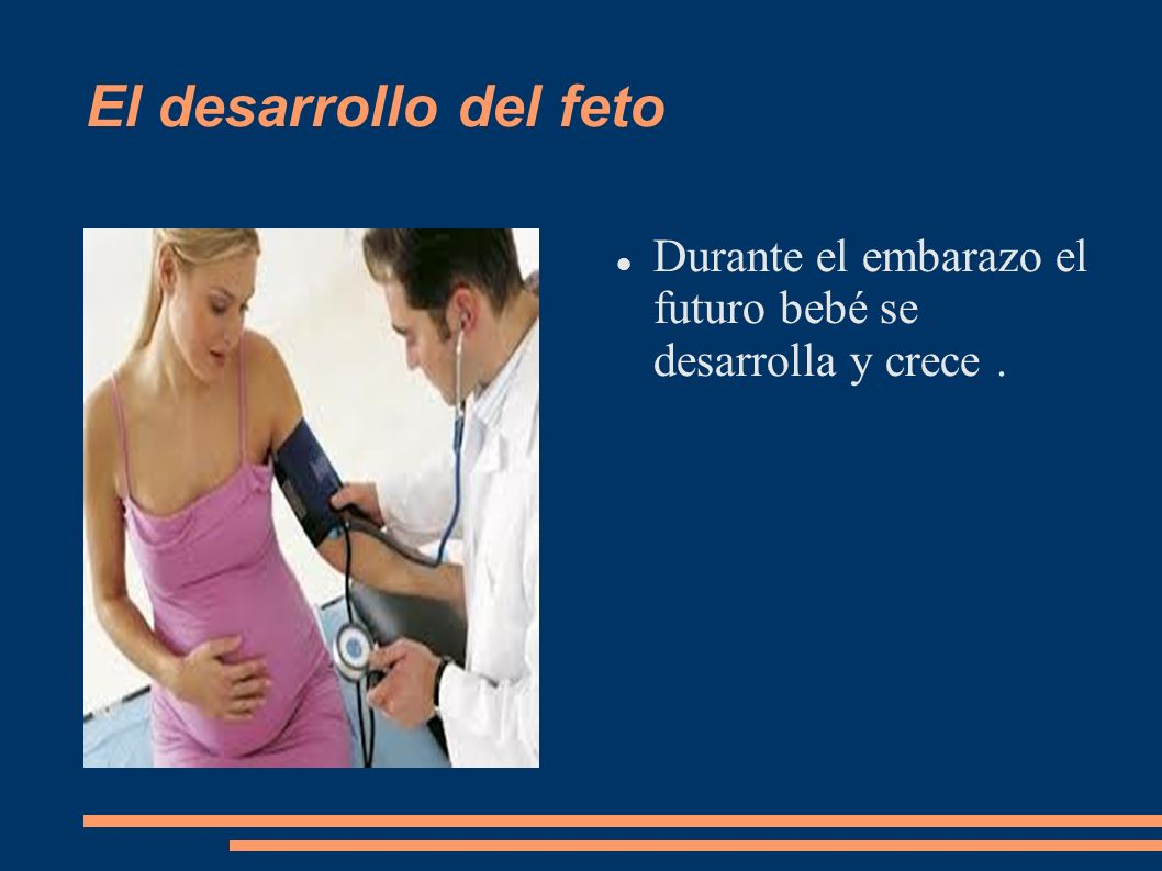 El desarrollo del feto Durante el embarazo el futuro bebé se desarrolla y crece .