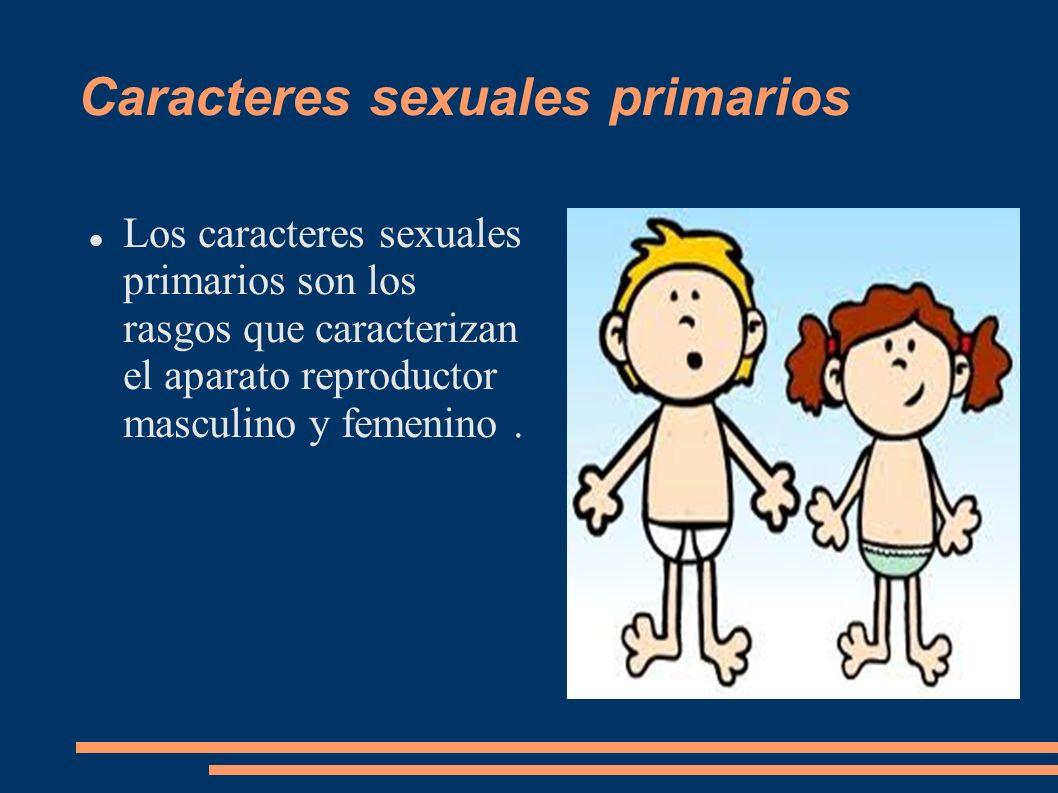 Caracteres sexuales primarios