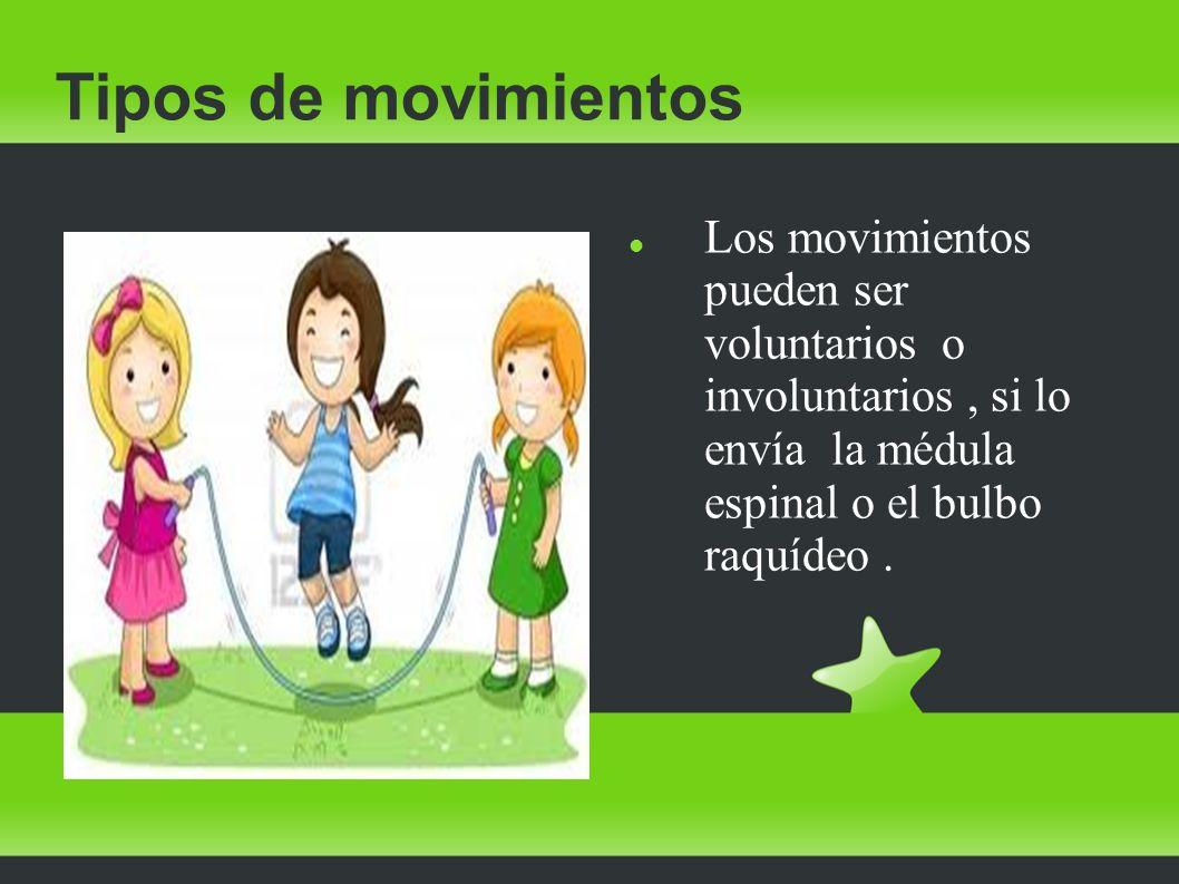 Tipos de movimientos Los movimientos pueden ser voluntarios o involuntarios , si lo envía la médula espinal o el bulbo raquídeo .