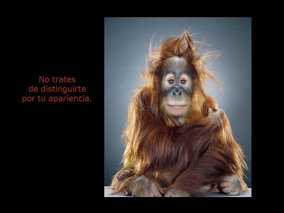 No trates de distinguirte por tu apariencia.