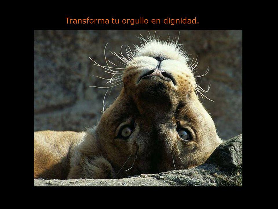 Transforma tu orgullo en dignidad.