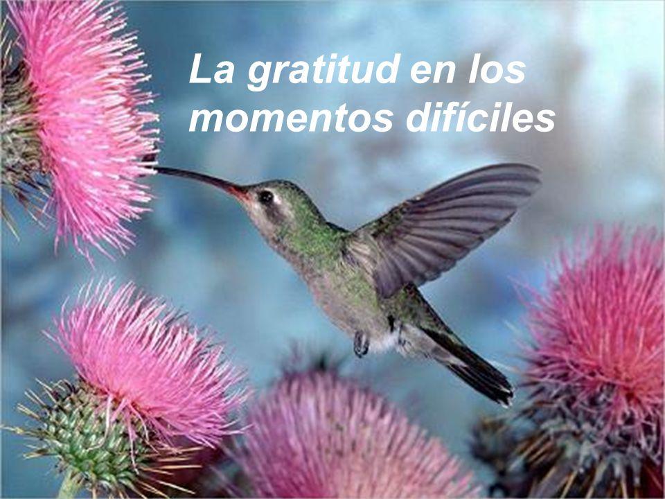 La gratitud en los momentos difíciles