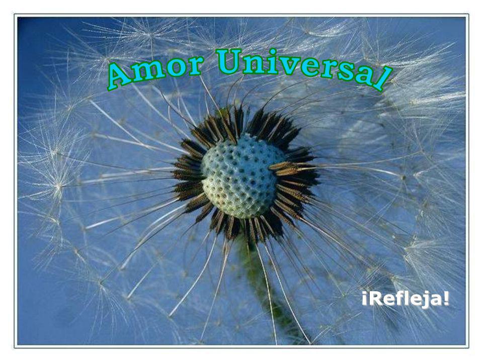 Amor Universal ¡Refleja!