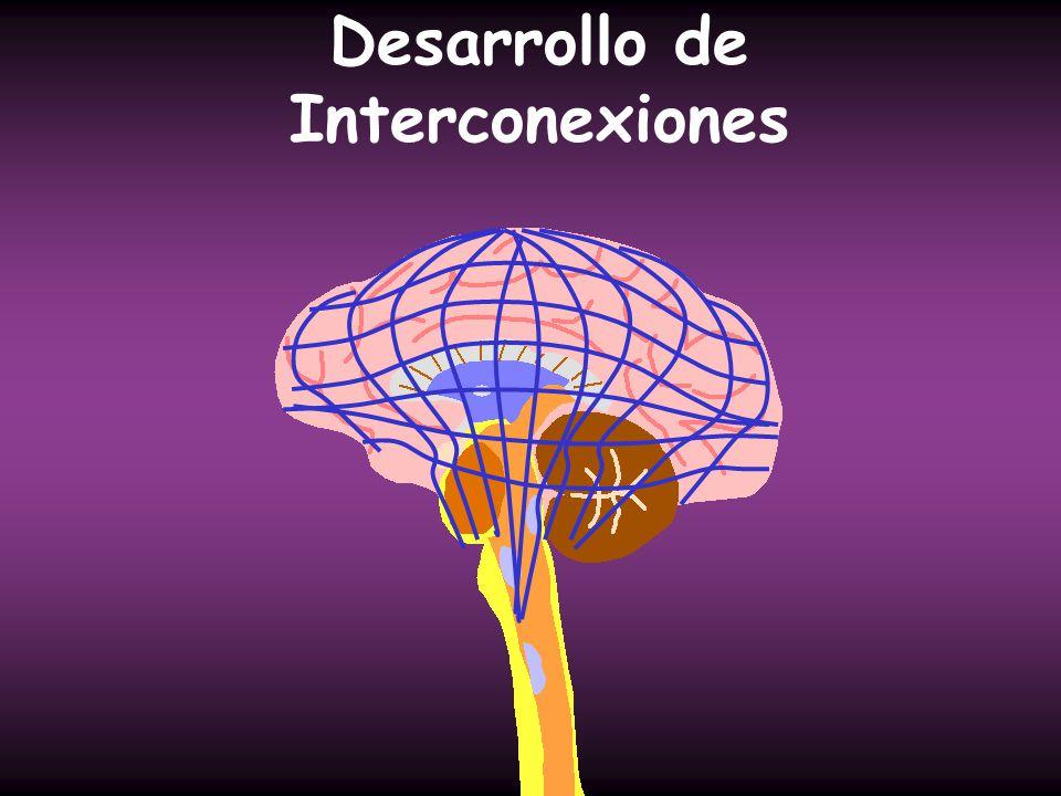 Desarrollo de Interconexiones