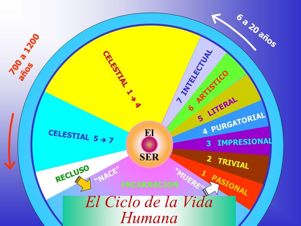 El Ciclo de la Vida Humana
