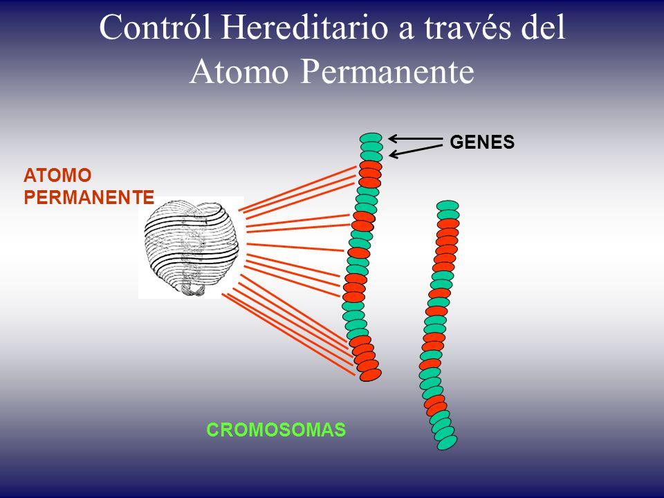 Contról Hereditario a través del Atomo Permanente