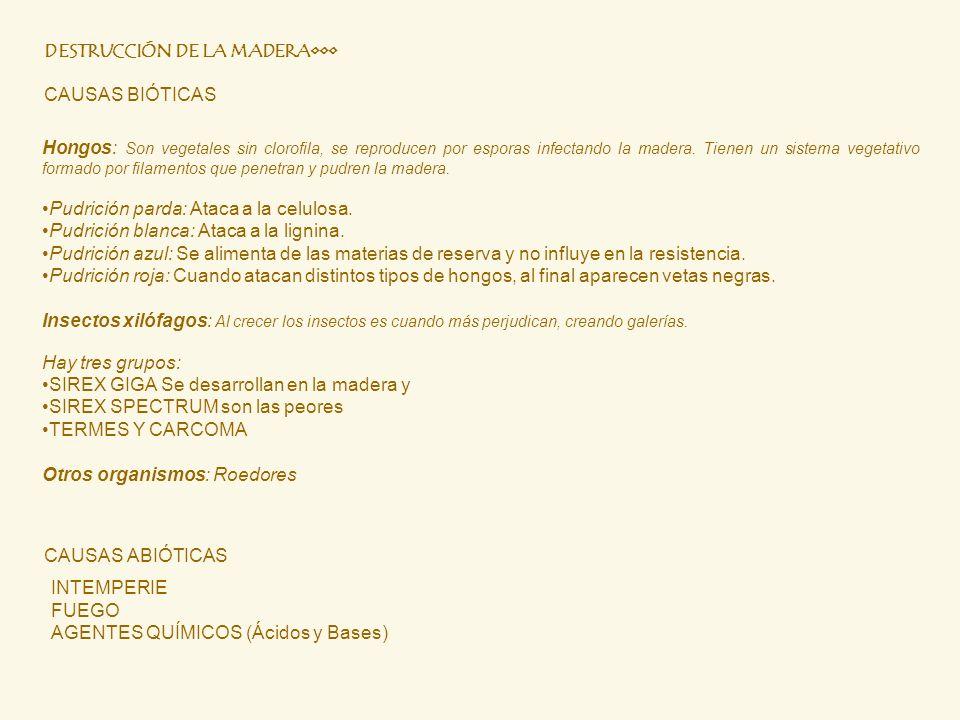 DESTRUCCIÓN DE LA MADERA•••