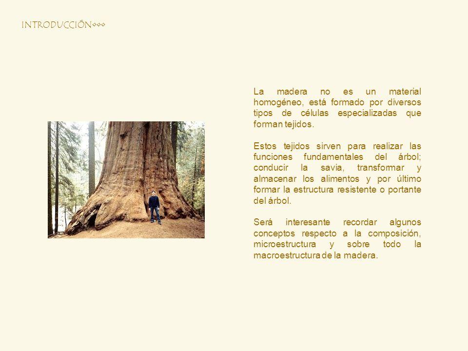 INTRODUCCIÓN••• La madera no es un material homogéneo, está formado por diversos tipos de células especializadas que forman tejidos.