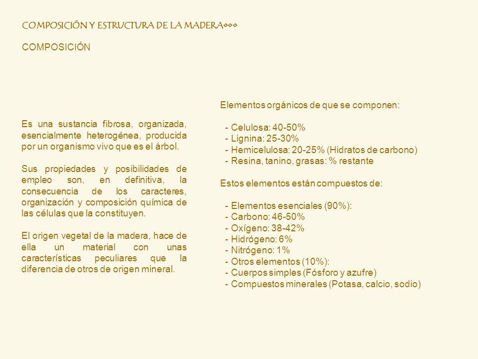 COMPOSICIÓN Y ESTRUCTURA DE LA MADERA•••