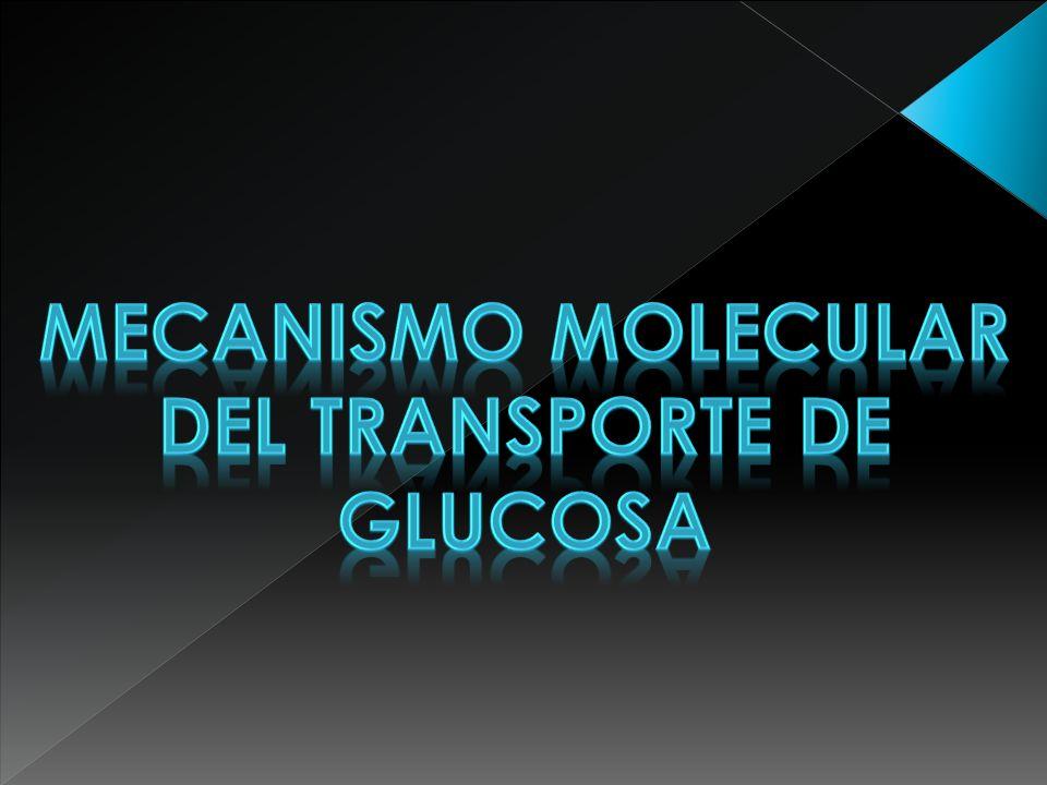 DEL TRANSPORTE DE GLUCOSA