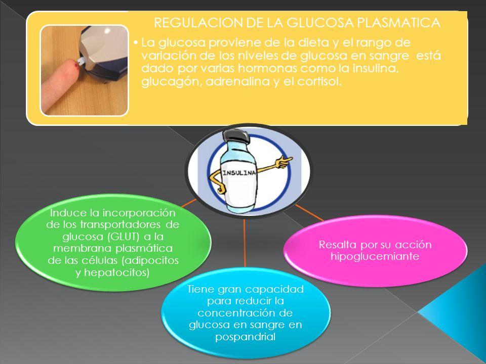 REGULACION DE LA GLUCOSA PLASMATICA