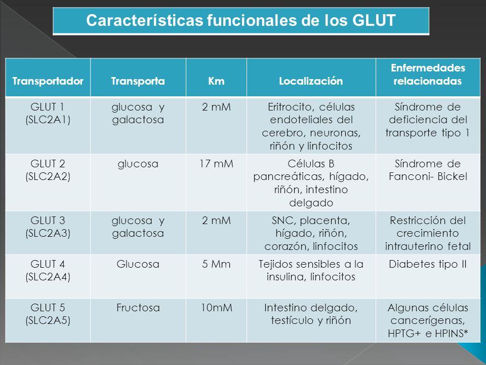 Características funcionales de los GLUT Enfermedades relacionadas