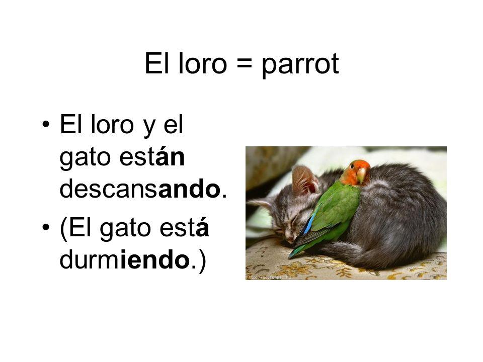 El loro = parrot El loro y el gato están descansando.