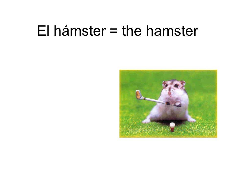 El hámster = the hamster