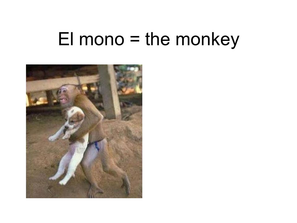 El mono = the monkey