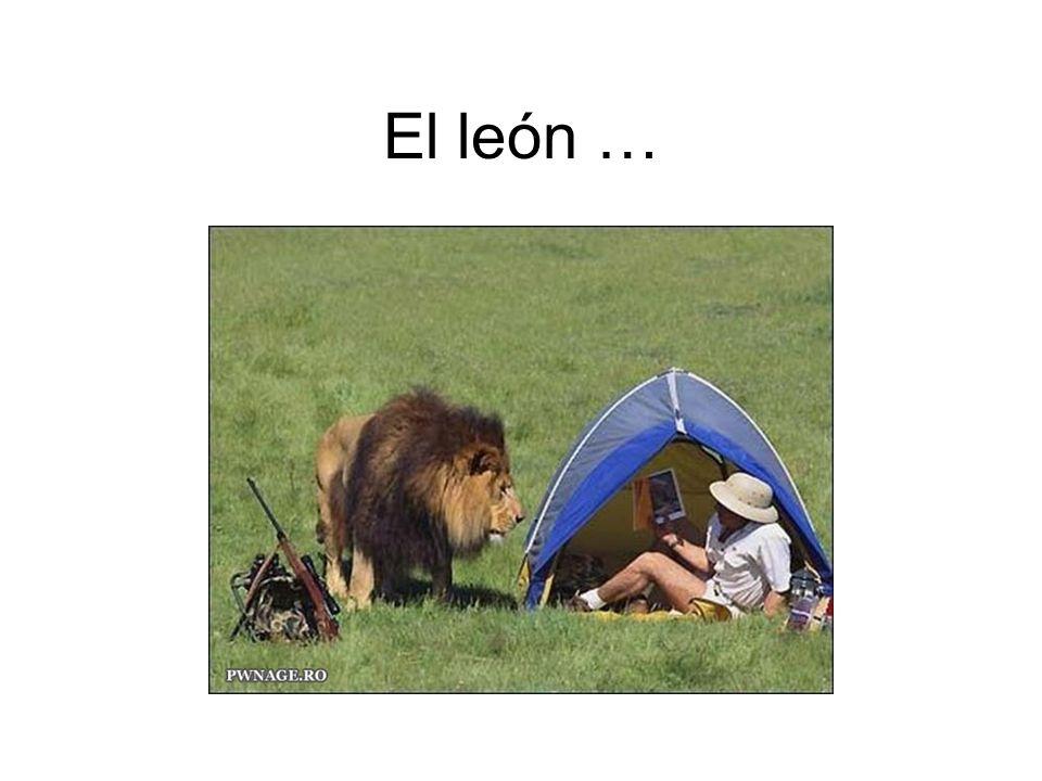 El león …
