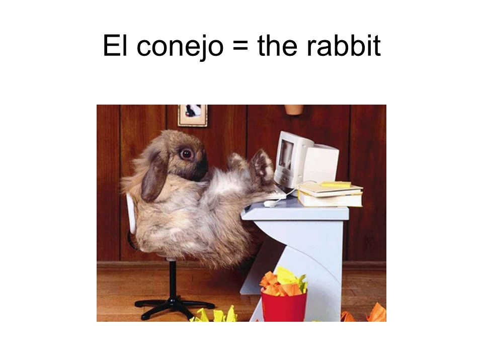 El conejo = the rabbit