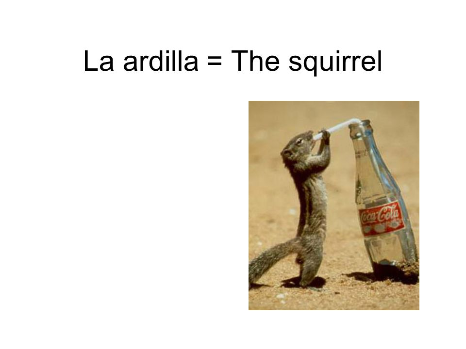 La ardilla = The squirrel