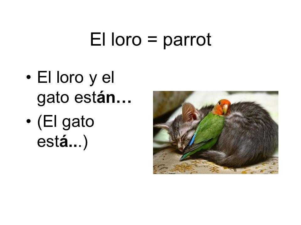 El loro = parrot El loro y el gato están… (El gato está...)