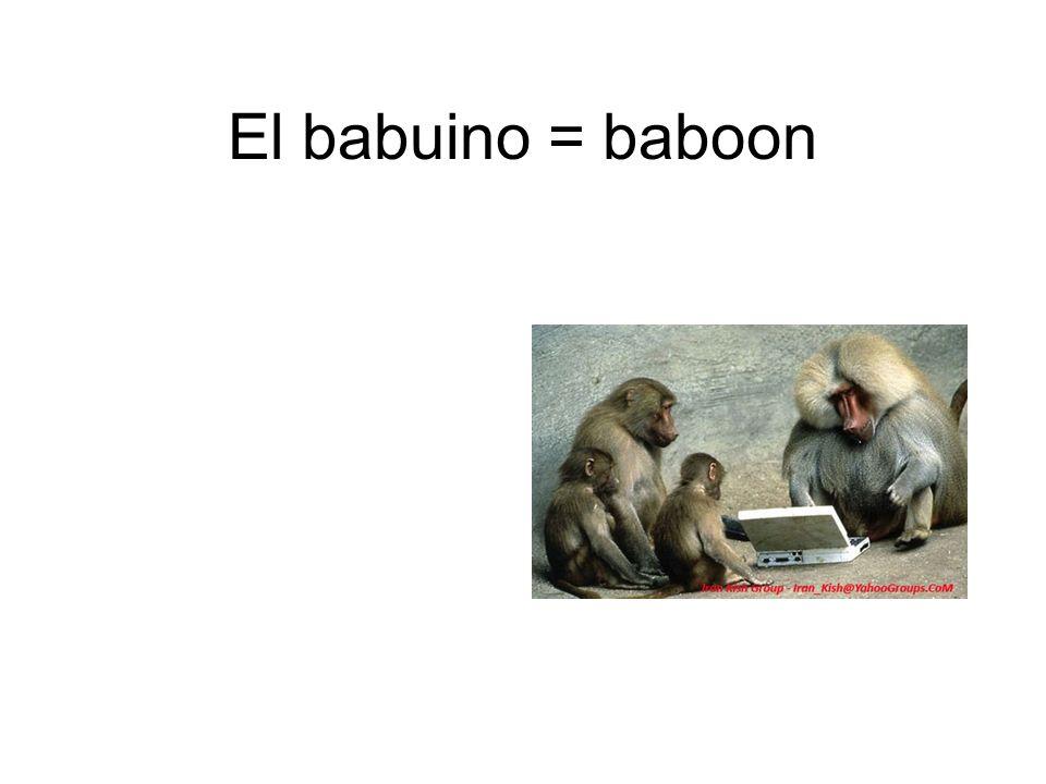 El babuino = baboon