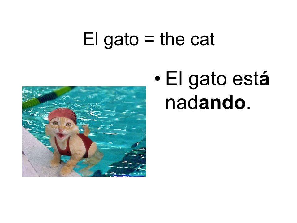 El gato = the cat El gato está nadando.