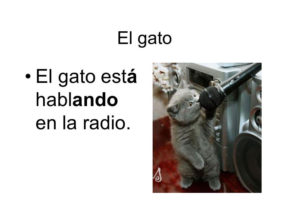 El gato está hablando en la radio.