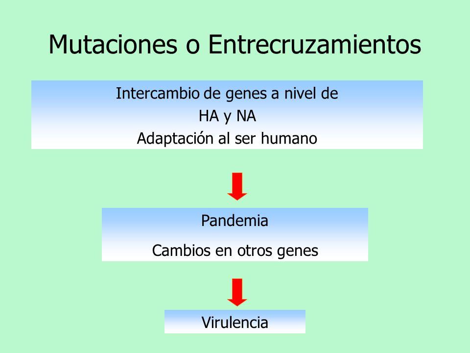 Mutaciones o Entrecruzamientos
