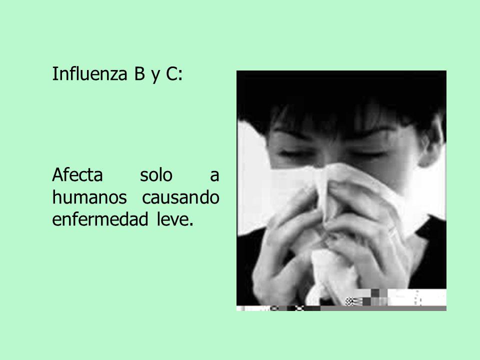 Influenza B y C: Afecta solo a humanos causando enfermedad leve.