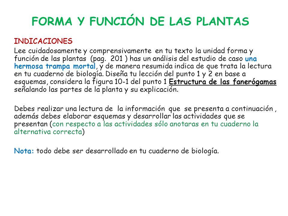 FORMA Y FUNCIÓN DE LAS PLANTAS